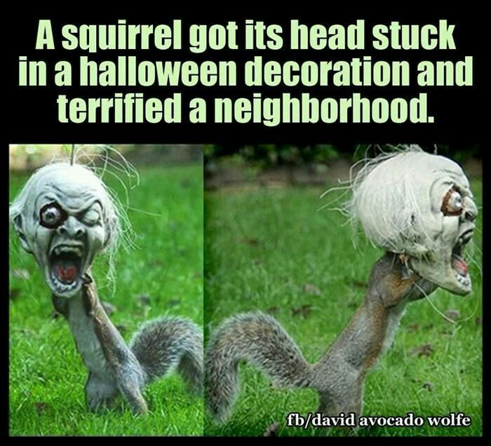 Funny Funny Squirrel Funny Animal Memes