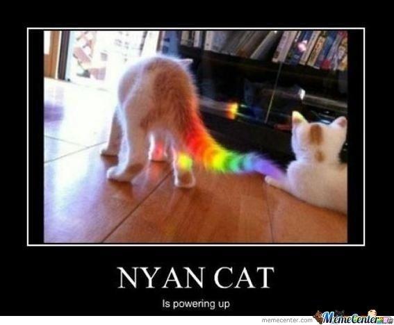 cute funny Cat meme 1