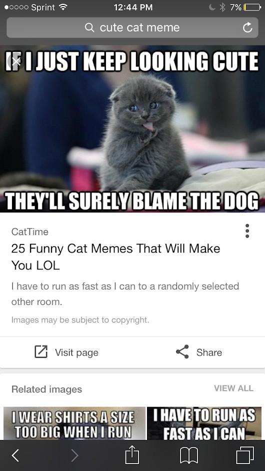Funny cat memesDiscussion ·   Dec 20 2016