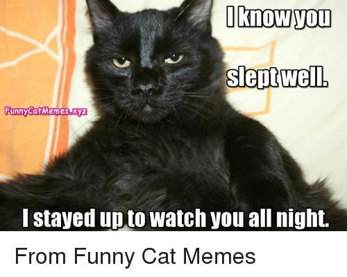 Memes 🤖 and Xyz I know Tou Slept well FunnyCatMemees I