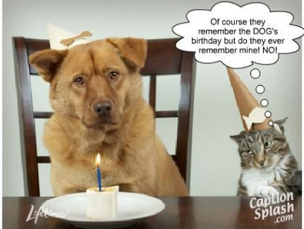 As the quote says – Description Image result for funny cat birthday quotes
