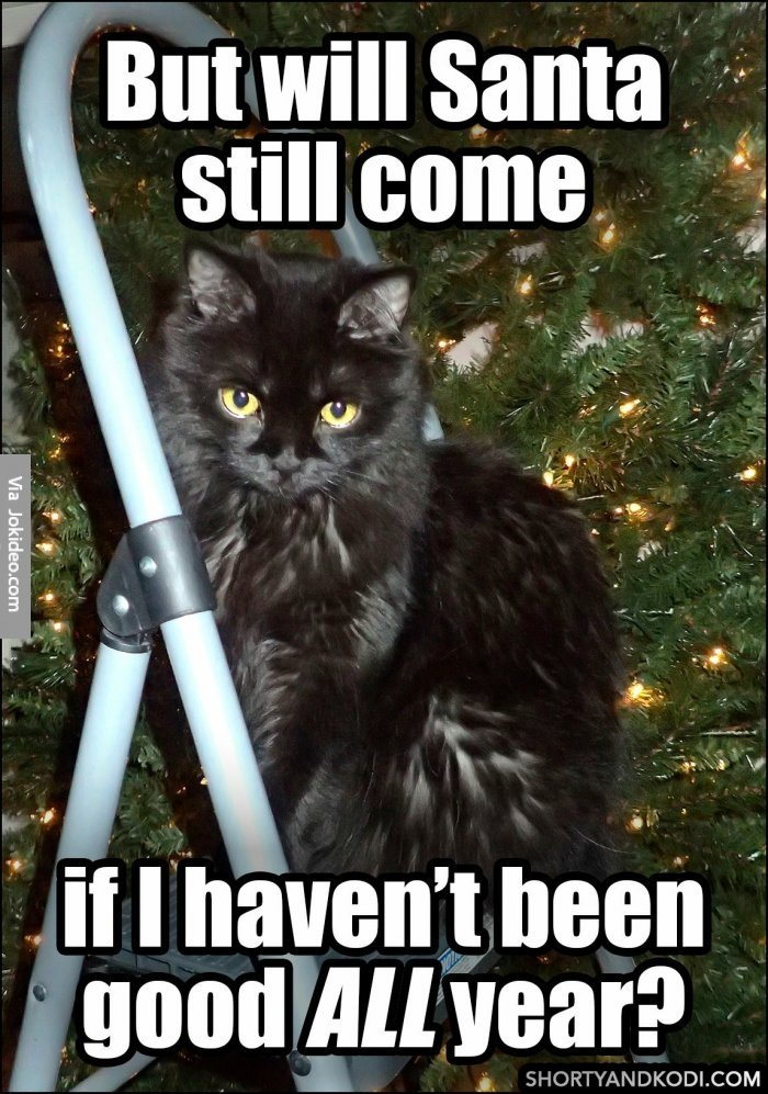 Get the Inspirational Funny Cat Christmas Memes