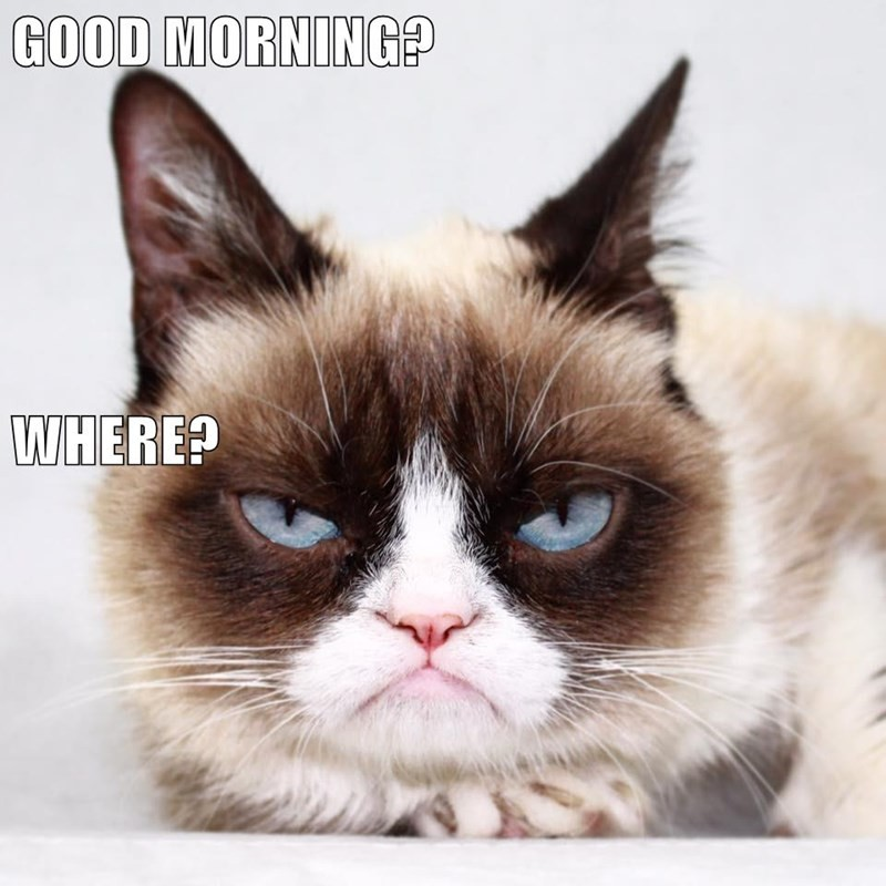 Grumpy cat meme of not enjoying a morning at all