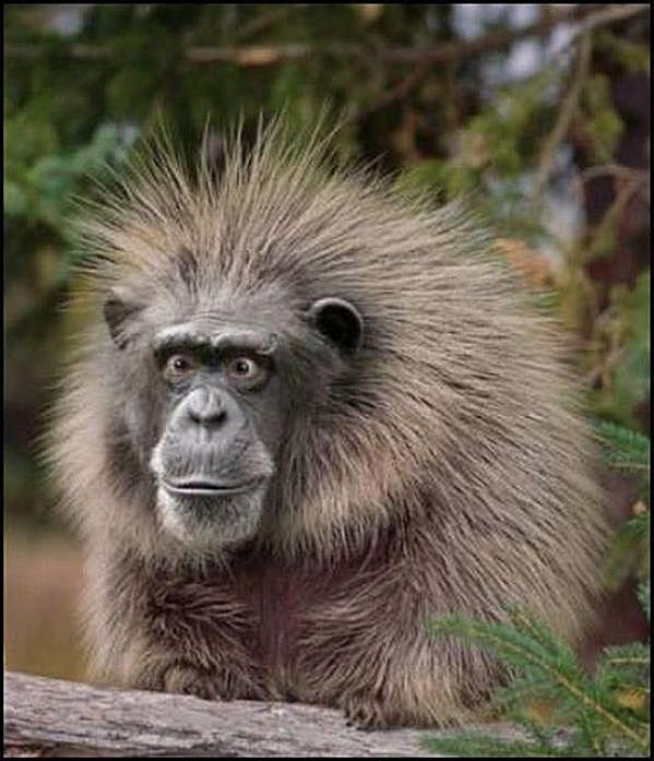 monkey funny face 58b8ed643df78c353c312c09