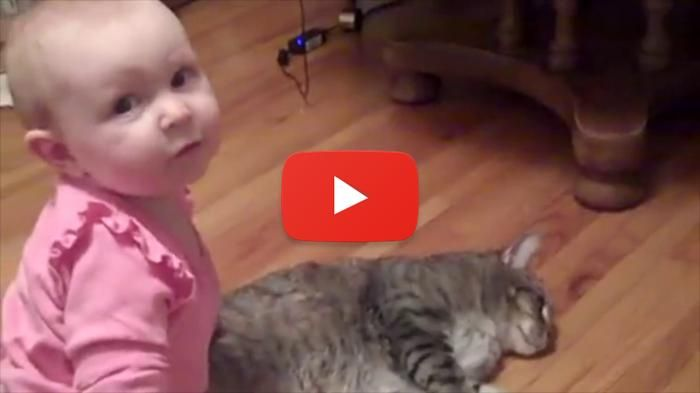 the most patient cats and curious baby play