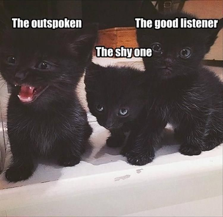 The Outspoken The Shy e The Good Listener funny humor funny pictures funny memes funny pics funny images funny animal memes really funny pictures