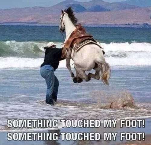 Take a BERRY Break 41 photos Funny Horse Quotes Funny Beach Quotes