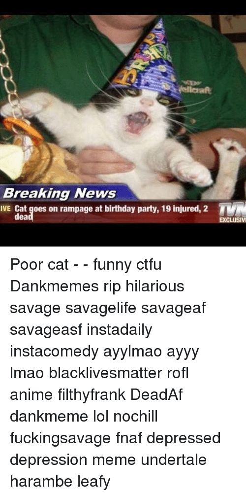 Memes 🤖 and Dea Breaking News IVE Cat goes on rampage at birthday