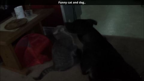 Funny cat and dog
