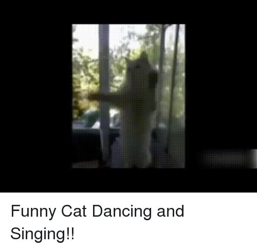 Dancing Funny and Singing Funny Cat Dancing and Singing
