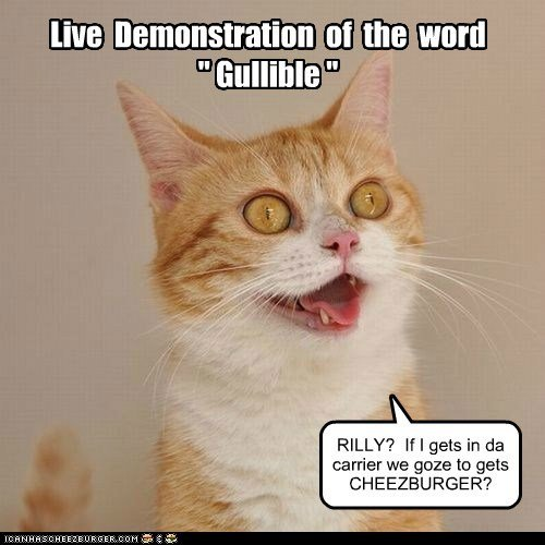 gullible cheezburger demonstration stupid Cats captions