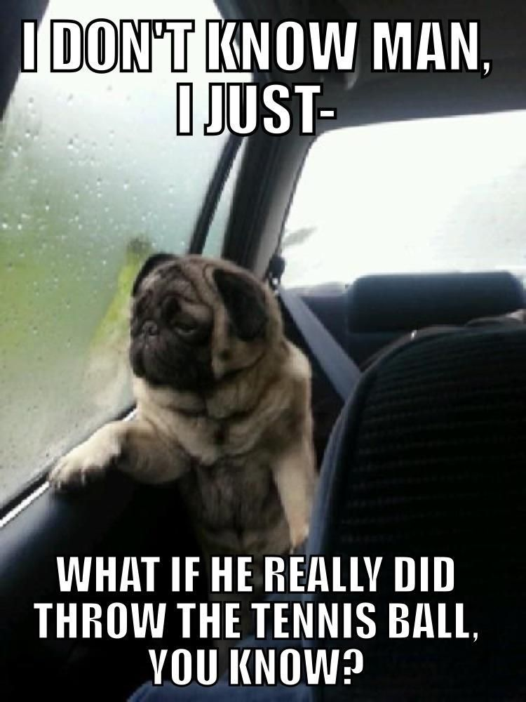 The absolutely hilarious introspective pug meme Introspective Pug Imgur My sister showed me this a couple minutes ago and I m still dying