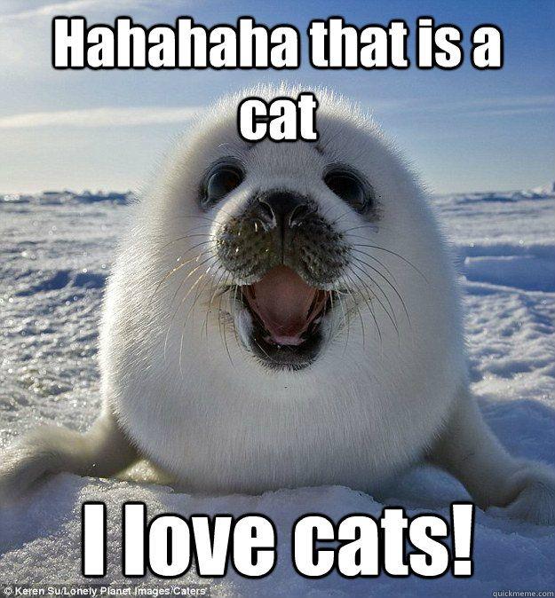 Hahahaha that is a cat I love cats