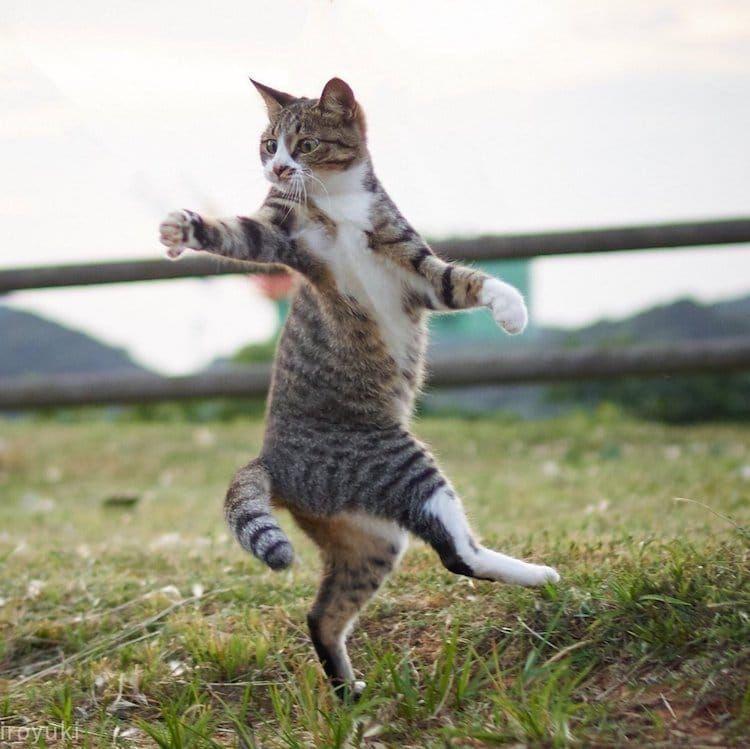 Hisakata Hiroyuki photographs ener ic felines at just the right moment
