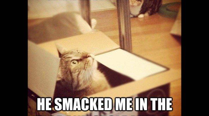 Memes · Funny Cat Memes 1