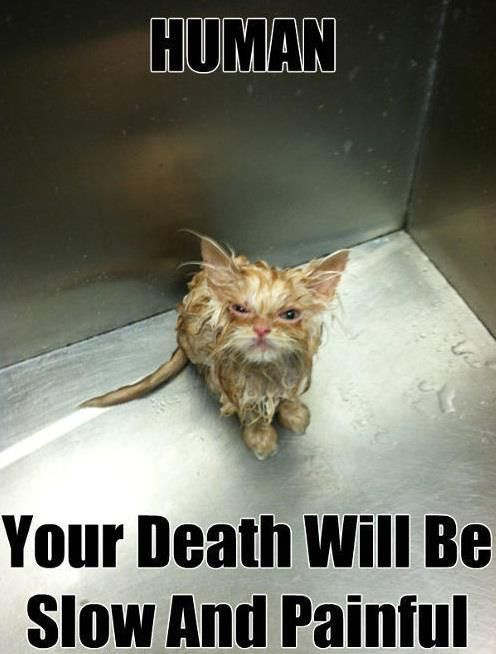 Very Funny Pics Cats Painful Death