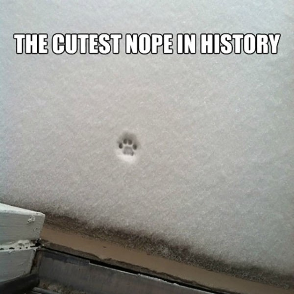 A single cat pawprint just might be the cutest