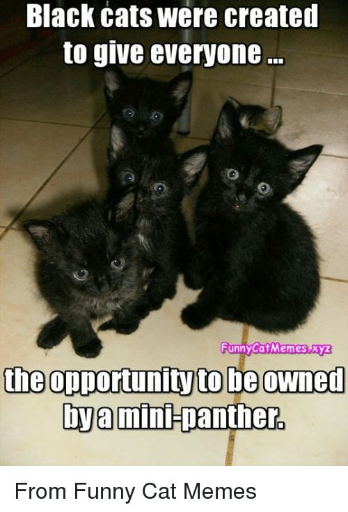 Cats Funny and Memes Black cats were created to give everyone