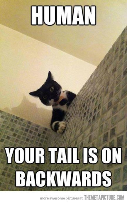 Get the Marvelous Clean Funny Animal Pictures with No Words