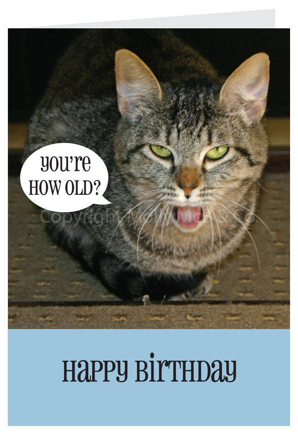 Happy Birthday Card Cat With Litle Pups