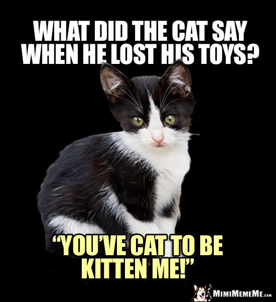 Curious Kitten Wants to Know What did the cat say when he lost his toys