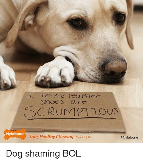 Memes 🤖 and Dog snoc s are SCRUMPTIOUS Nylabone Safe Healthy Chewing Dog shaming BOL