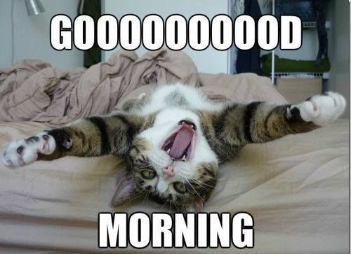 Funny cat way of saying good morning for him and her meme