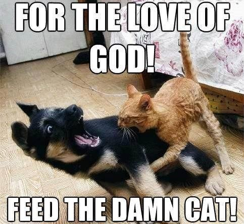 funny cat memes images