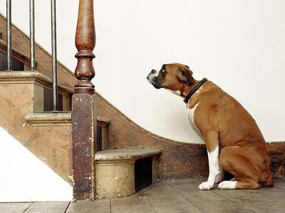 If Your Dog is Afraid of Stairs Here s What to Do