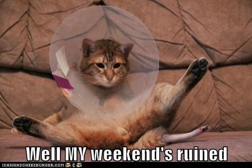 Well My Weekend Cat Meme