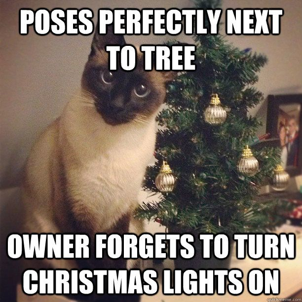 Poses Perfectly next to tree Owner for s to turn christmas lights on Cat Pose Fail