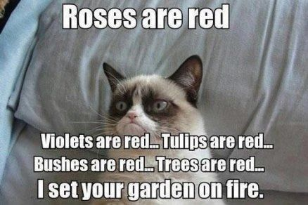 Roses are red Grumpy Kitty Funny Grumpy Cat Memes Cat Jokes Grumpy Cat