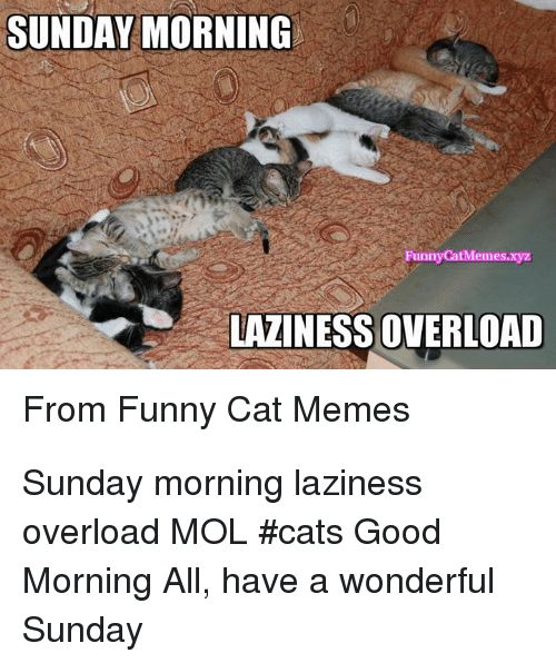 Cats Funny and Memes SUNDAY MORNING FunnyCatMemes LAZINESS OVERLOAD From Funny