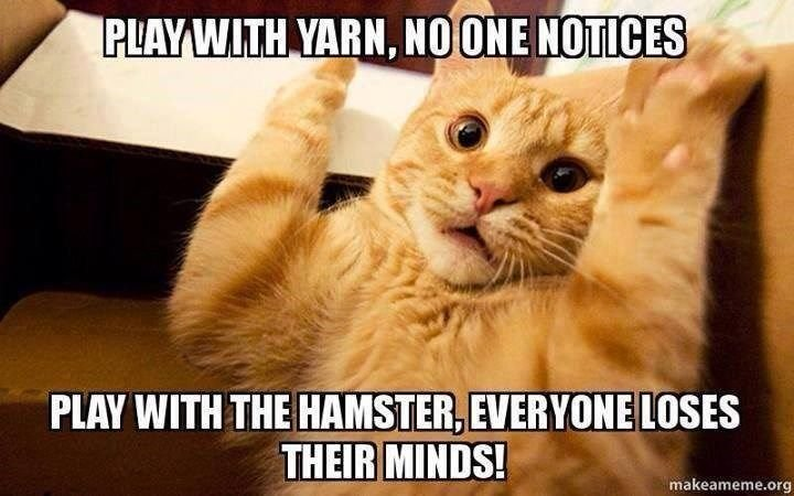 33 Funny Cat Memes That Never Fail to Make Us LOLTap the link to check out