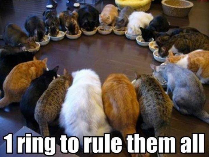 Get the New Funny Cat Pics Memes