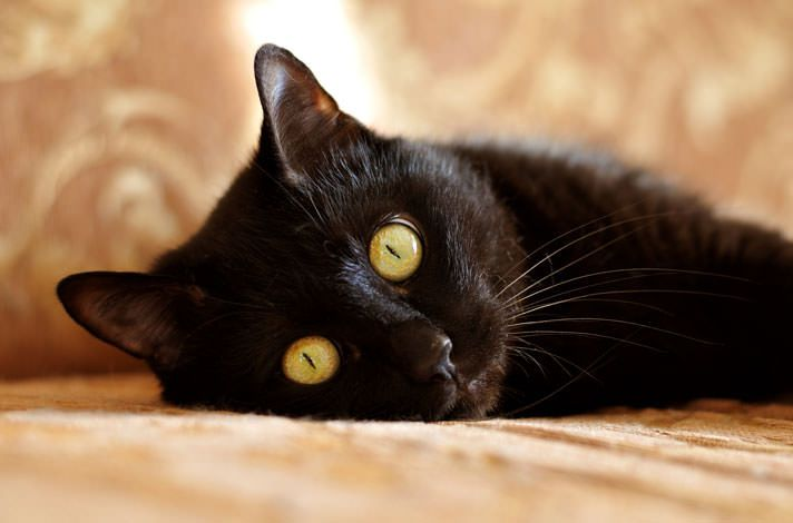 Black Cats Throughout History