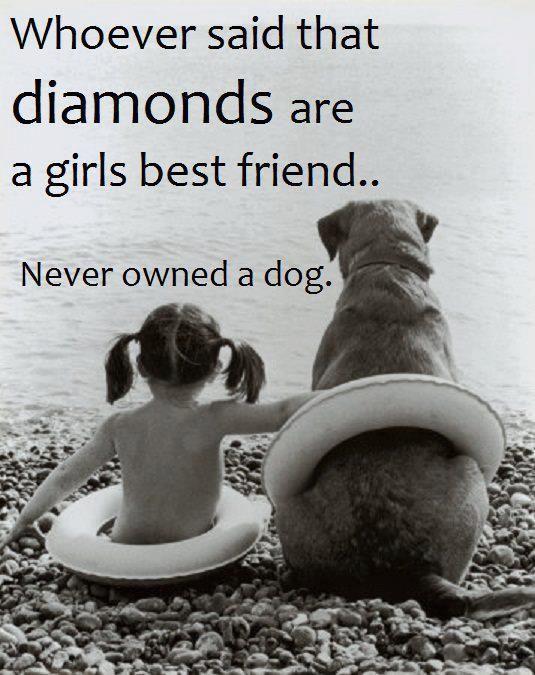 Dog Quotes Funny ""
