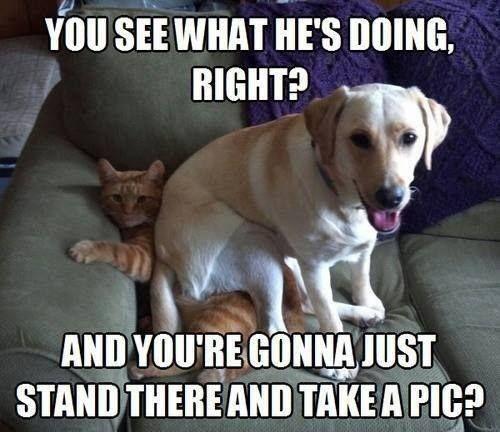 dog cat funny meme