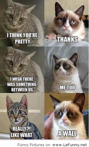 Pretty grumpy cat