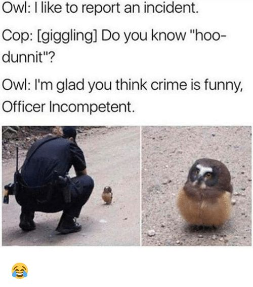 Crime Funny and Memes Owl I like to report an incident