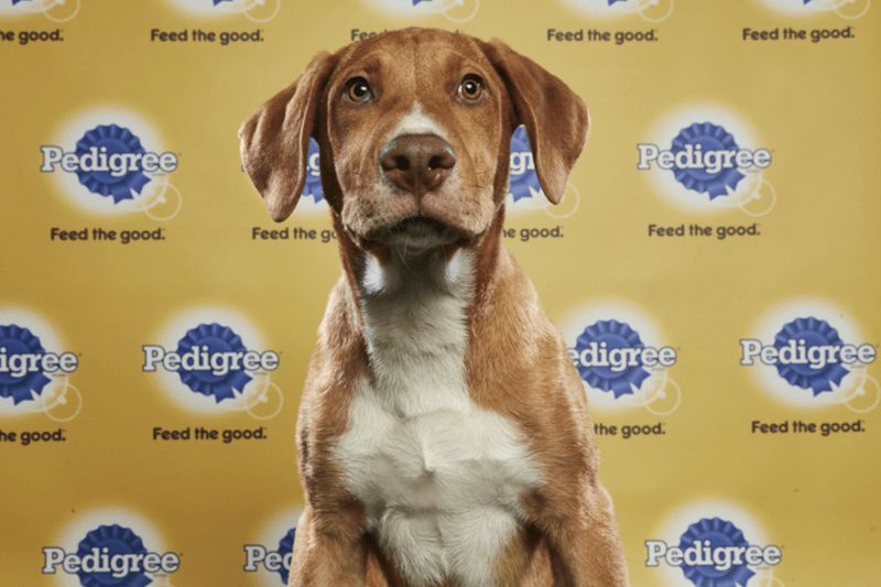 dogs super bowl Puppy Bowl cute funny