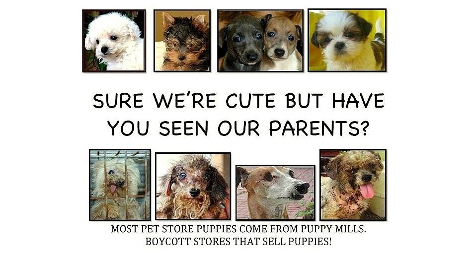 """Philadelphia Bans Pet Shops from Selling Puppy Mill Dogs """""""