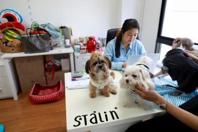 Dogs are seen on Jirmas desk as she works in an office of a digital