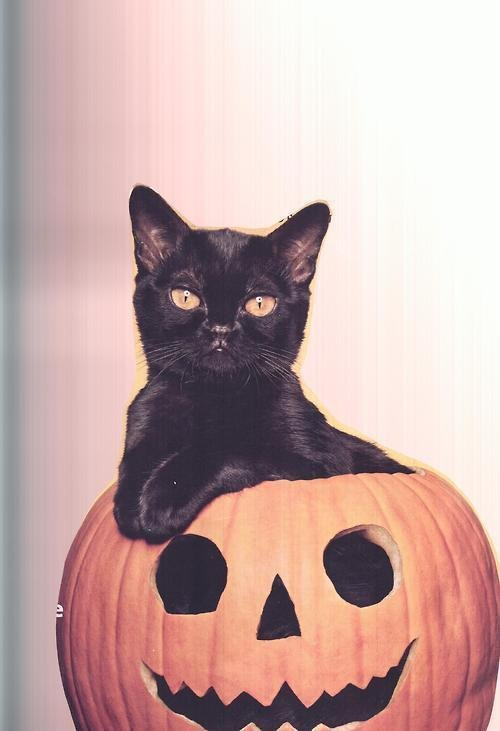 scary photography funny cute tumblr Halloween cats fall costume cat blog cat lady Black Cat cute