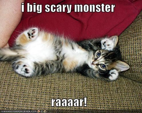 File B Funny cat