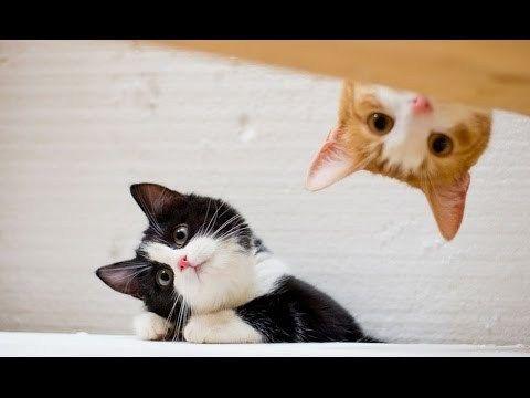 Super funny videos – Best Funny Cats Fails pilation