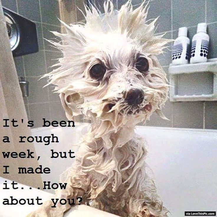 Its Been A Rough Week But I Made It Through funny quotes quote jokes funny quote funny quotes funny sayings humor quotes that make you laugh quotes that