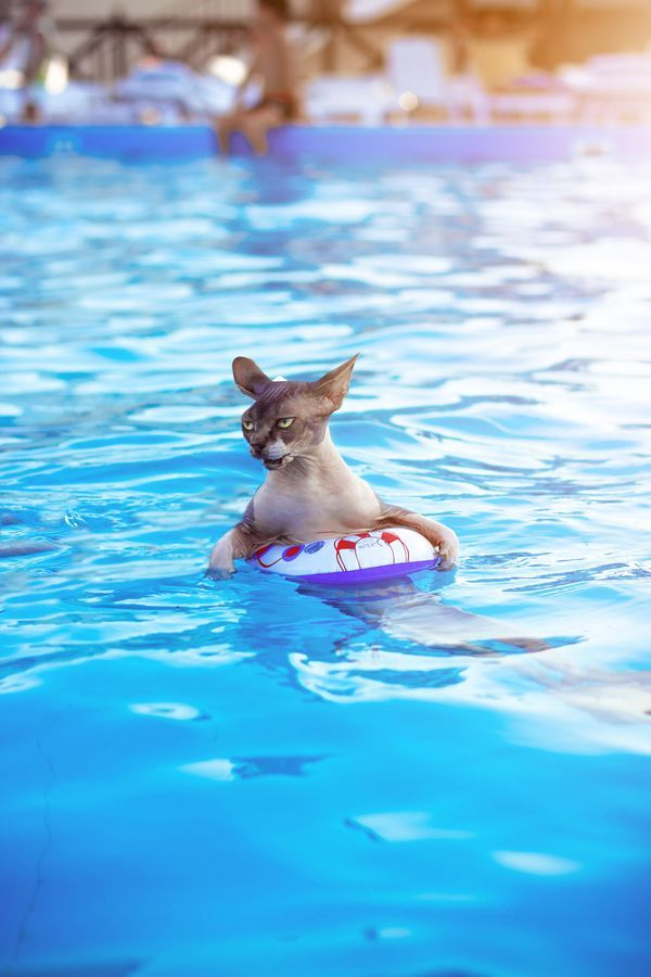 Amazing swimming cat by zhygun via 500px Pets Pinterest