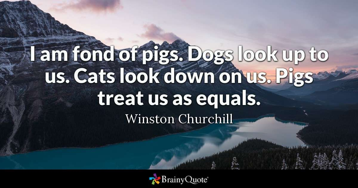 Quote I am fond of pigs Dogs look up to us Cats look down on