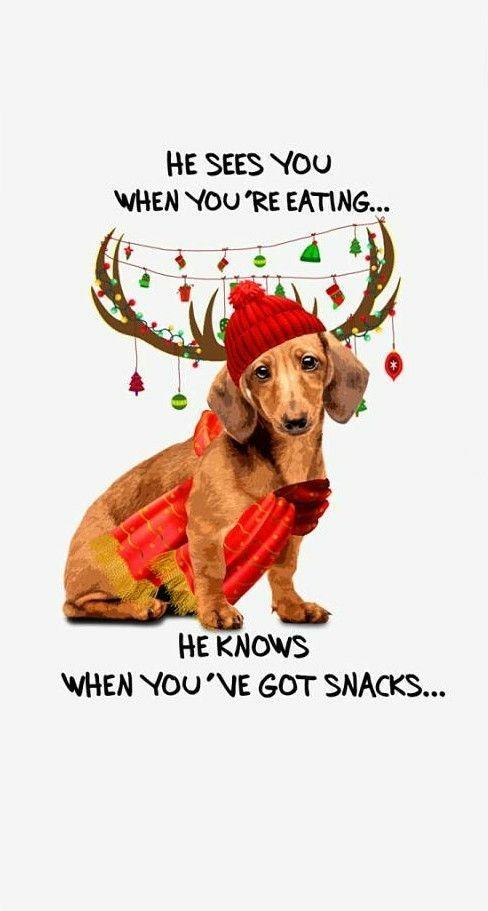 Christmas Christmas Dachshund Christmas Dog Dog Humor Lap Dogs Daschund Year